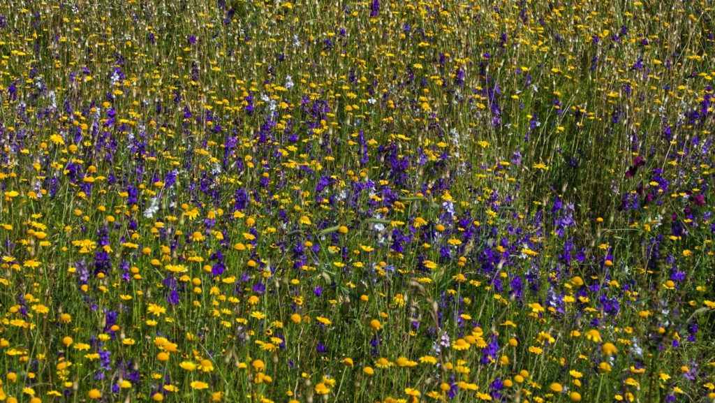 plants in the grasslands